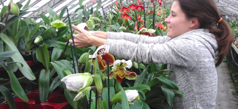Transition familiale en douceur pour les orchidées Vacherot-Lecoufle
