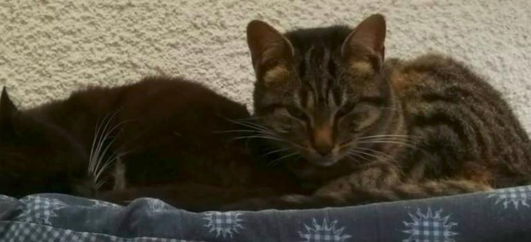 A Ormesson, les chats de la vieille dame attendent leur sauveur