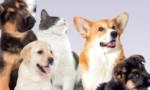 Droits et devoirs des animaux: Nogent sort un guide pratique