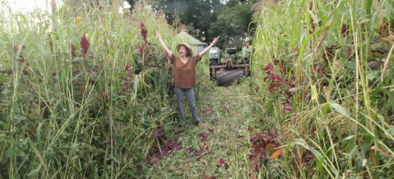 À la découverte de l'agriculture naturelle: conférence à Choisy-le-Roi