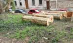 Polémique à Orly : les tronçonneuses ont débarqué au bois Grignon