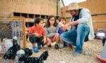 Une ferme pédagogique au centre équestre de Bry-sur-Marne