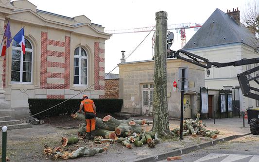 Les platanes devant la mairie de Boissy-Saint-Léger abattus