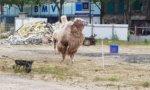Menace de représailles après l'évacuation d'un cirque à Ivry-sur-Seine