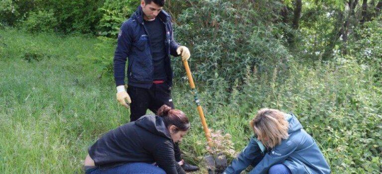 Après nettoyage, Ose plante ses érables à Villeneuve-Saint-Georges
