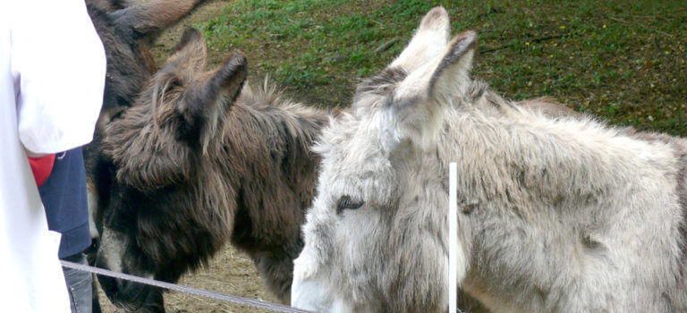 Des ânes qui soignent aux Hôpitaux de Saint-Maurice