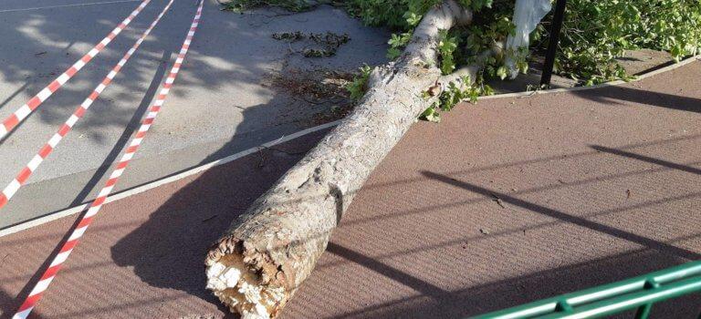 Chute d'arbre à l'école Romain Rolland B d'Orly