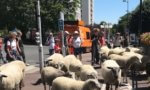 Transhumance de moutons dans le Grand Paris