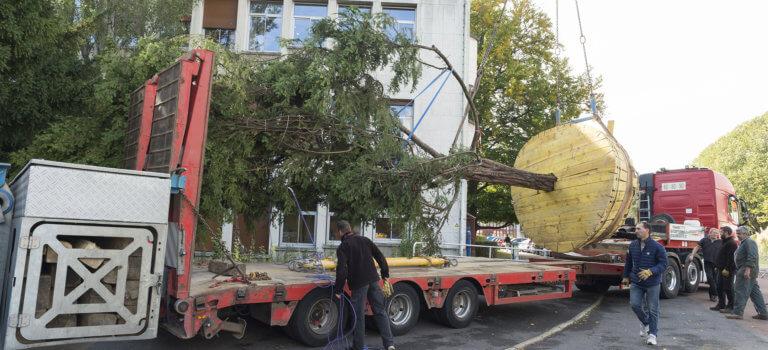 Un arbre du campus de l'ENS de Cachan replanté sur le plateau de Saclay