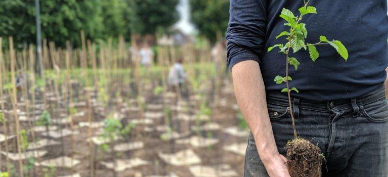Plantation d'une forêt citoyenne à Ivry sur Seine