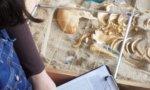 Journées du patrimoine en Essonne –  sur les traces du paléolithique aux Tarterêts