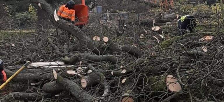 L'Haÿ-les-Roses: polémique suite à l'abattage des arbres du square Allende
