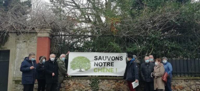 Saint-Maur-des-Fossés: les habitants mobilisés pour sauver le chêne quadri-centenaire