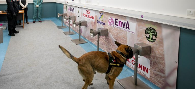 Maisons-Alfort: les chiens renifleurs au banc d'essai de la détection du Covid