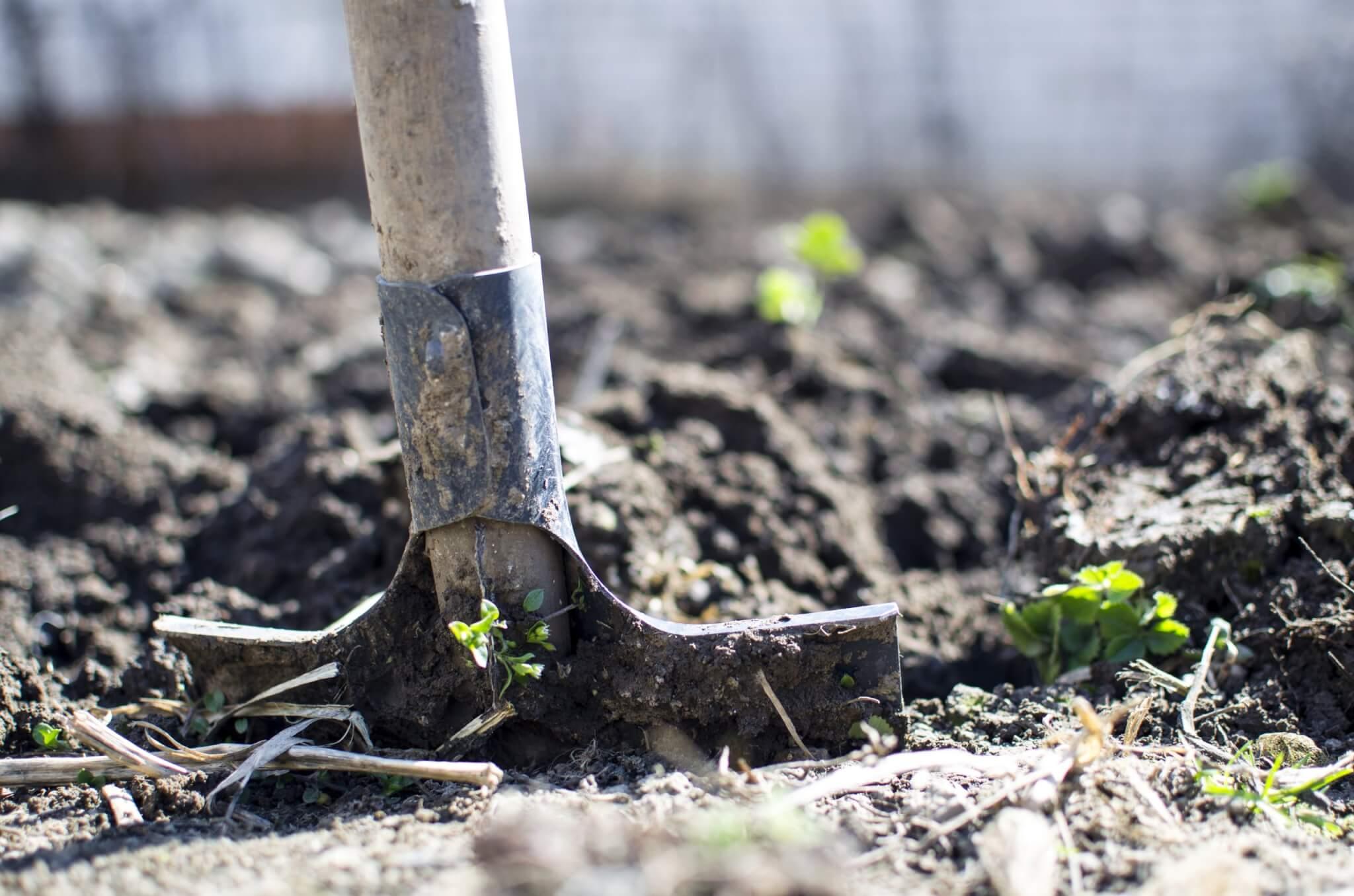 Thiais annule à nouveau sa fête du jardinier amateur