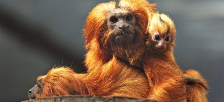 Paris: des nouvelles applis jeunes pour la réouverture du zoo du Jardin des Plantes