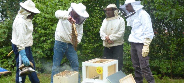 Matinée découverte de l'apiculture à Créteil