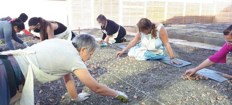 """Du safran """"maison"""" cultivé sur le toit de Créteil Soleil"""